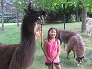 CLL_birthday_llama