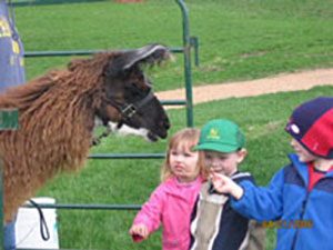 CLL_petting-zoo
