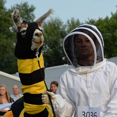 Llama in Bee and Bee Keeper Costume at he Carver County Fair