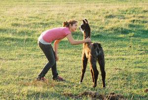 CLL_adopt a lama