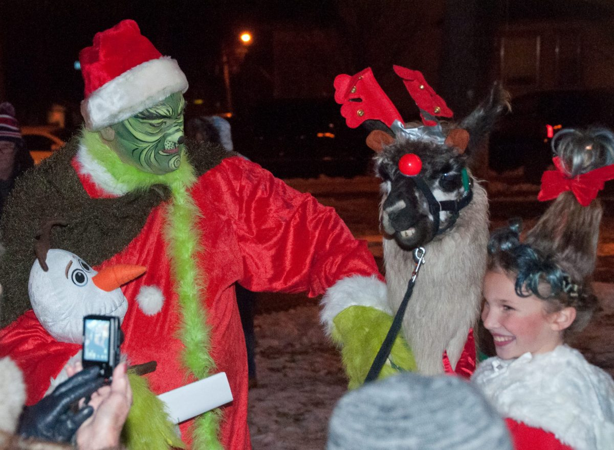 Llamas at Tree Lighting Ceremony Waconia, MN