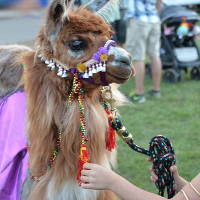 Llama Dressed in Costume