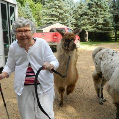 Leading a Llama