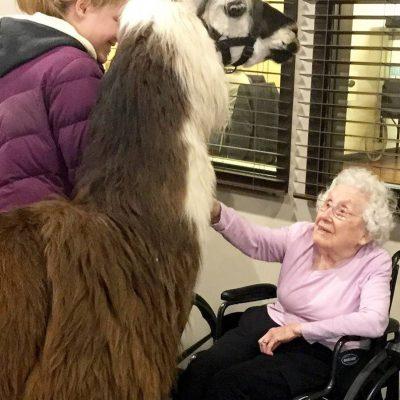 Llama Therapy Visit