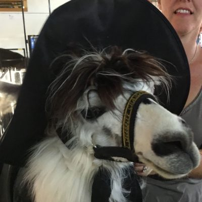 Llama Dressed as a Character from Harry Potter
