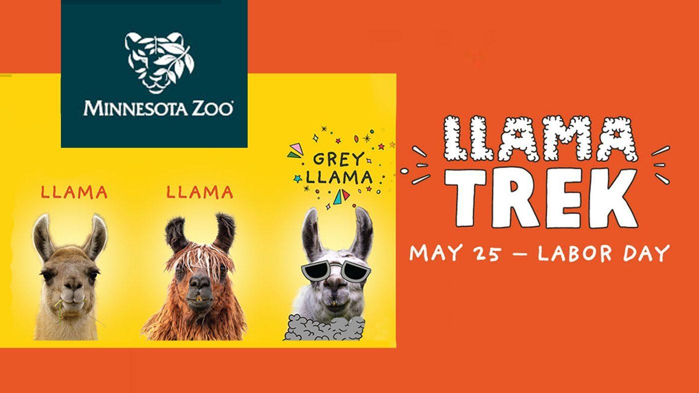 Minnesota Zoo Llama Trek Poster